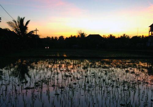 Beer Travel: Bali, Hops, Water & Yeast II