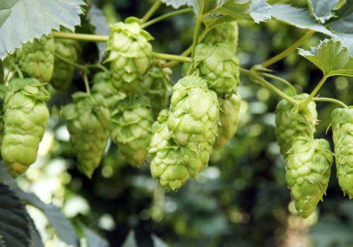 Hottest 100 Aussie Craft Beers of 2016: Analysis